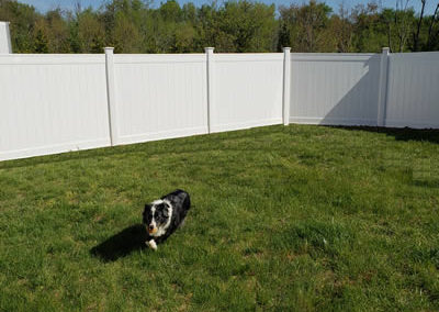 Pet Boarding: Outdoor Pet Area